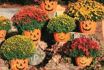Fall Decor / by Christy Boehringer