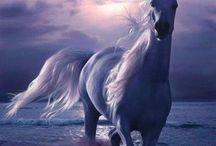 caballo en atardecer azul