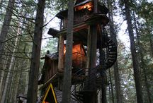Case sugli alberi