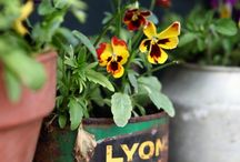 Gardening - Container / by Jackie Brown
