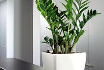 Растения в интерьерах / Растения для съёмки в интерьерах, идеи использования растений в оформлении интерьеров и дизайне помещений