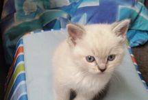Chaos the Kitten / our new member of the family