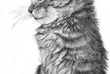Картинки. Кошки