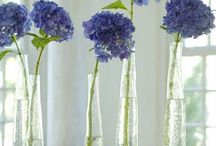 plants galore / by anne scott turner