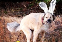 DOGS THAT WILL MAKE YOU LAUGH / Dogtails® - Natural Dog Products. Great for your dog's fur, mentality and our earth.  www.DogtailsShop.com
