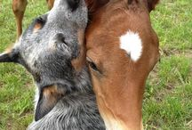 Dogs and Horses