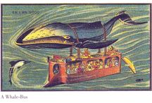 History of Dolphins and Whales
