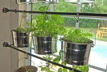 Jardins d'herbes suspendus