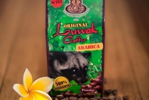Koffie / Kopi Luwak