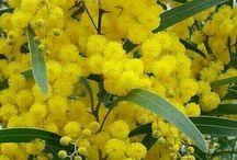Chelsea Yellow Ombre