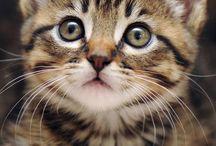 = ^ .. ^ = Acho que vi um gatinho