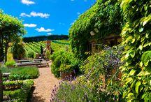 Auckland - New Zealand Wine Region / For more New Zealand wine inspiration visit sipnzwine.com