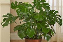 Plants / filodendron and other plants