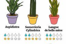 plante et jardin