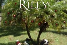 Finding Riley - Pics from Scenes in the Book / A collection of pics taken from places mentioned in Dan Walsh's novel, Book 2 in the Forever Home series.