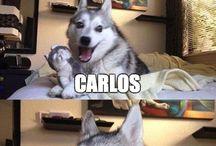 Husky Witze