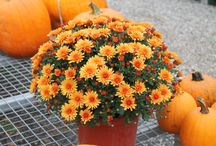 Colors of Autumn / The warm colors make our garden center so inviting this time of year!