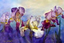 Kwiaty-Irysy