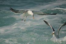 aves / fotos tomadas a aves en la quinta costa chile con lente 75-300 canon