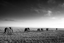 Tanzania / by Debbie Crowley