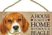 beagle  love you