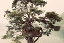 Domek na drzewie / Domek na wielkiej sośnie