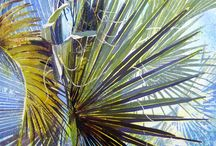 Painting Palms / by Francoise Chauray