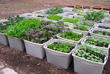 Horta & Plantar