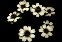 Floral / by Cathleen Tarawhiti