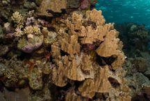 Underwater Red Sea