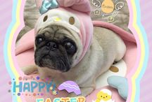 Easter Pugs / No explanation needed.
