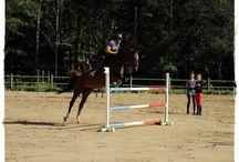 Dressage et CSO / Les plus belles photos des chevaux de concours