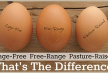 Pasture raised eggs / by Caren Riddell