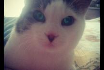 "Pascal Cat 21 / Pascal Cat 21 ""Kedidir ne yapsa yeridir"""
