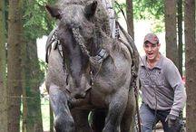 Lovak -Horses