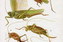 Naturalist illustration
