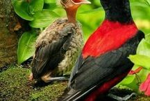 Birds n babies