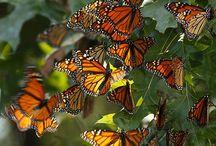 Butterflies and dragonflies / by Leilani Decena Shepherd