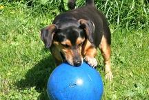 Onze Honden / Foto's van Drammer, Max en Marron
