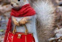 Eichhörnchen / was ich gerne mag