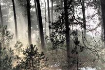 Foto's Natuur / Bergen. N.A. Drost / Zelf gemaakte foto's van de natuur op de Veluwe en de Bergen in Oostenrijk