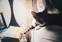 本と猫 二冊目