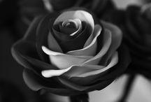 JULIACAEZAR / Цветы из фоамирана