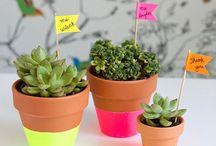 Terracotta DYI plants