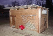 Farm- Goat Shelter / by Brittney Huff