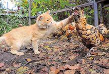 Zvieratká / Milujem zvieratká- male , veľké, domáce aj divé