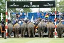 Elephant Polo Tournament / by Anantara Hotels, Resorts & Spas