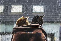 Уютность/Cozy