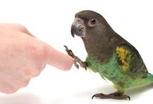 Parrot items / Toys etc. for my parrots, ideas, food, health