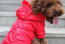 Keep Your Pet Warm! / Jackets and winter wear for dogs and cats.